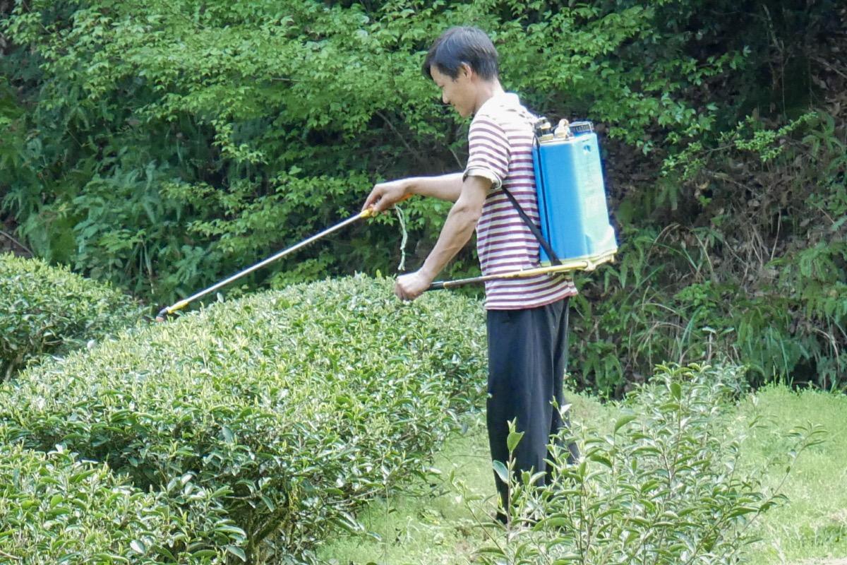 Pestizide Im Tee